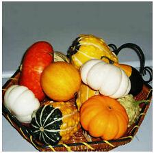 Pumpkin Seed 10 Seed Mix Ornamental Doll Pumpkin Cucurbita Vegetable Garden B012
