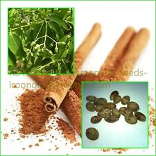 Seeds: 15 Cinnamon seeds, Spices-Seasoning-Herb seeds, Fresh new harvest, RARE