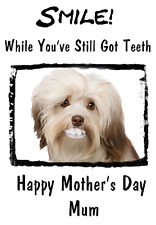 Havanese Dog Mother's Day Card Teeth Humour chmd65 A5 Personalised Greetings