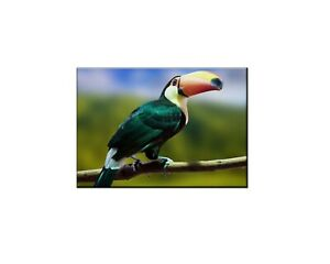Best Gifts Home Wall Decor Toucan Bird Oil Painting Picture Printed On Canvas