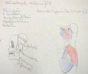 "HOLLMANN DUVAL GERMAN PENCIL ""ANATOMICAL SKELETON"" STUDY 1950 A"