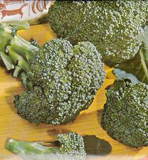 Brocoli spargelkohl Brassica oleracea aprox. 100 Korn