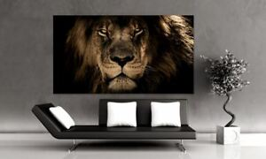 ANGRY LION MARCO art Home decor High quality Canvas print choose size