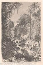 Antique print cornetos colombian jungle forest Colombia 1879