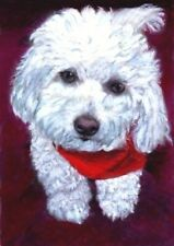 NEW BCB White Dog Wearing a Red Scarf Print of Painting ACEO 2.5 x 3.5 Inches