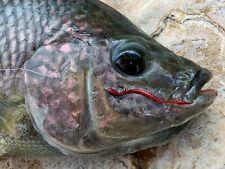 Fly Fishing Flies (Bass, Bream, Trout) Strung Out San Juan Worm Red (6 flies)