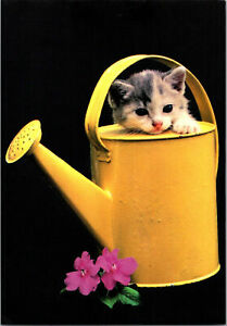 Cute Little Gray Cat Watering Can Flowers New Modern Russia Real Photo Postcard