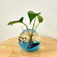 Fish Bowl Style Clear Glass Flower Vase Hydroponic Planter Terrarium Decor