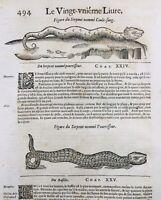 Herpétologie Serpent 1614 Vipère Venin Montpellier Basilic Pergame Pline Égypte