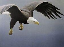 Robert Bateman Art Print Alaskan Autumn Grizzlies Bear Approach Bald Eagle 1995