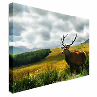 Scottish Stag on Highlands Canvas Wall Art Picture Print