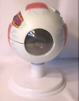 Human eye eyeball expansion anatomy anatomical model medical optometry display