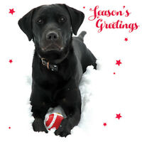 Charity Christmas Card Pack - Labrador Fun! (10 Cards of 1 Design)