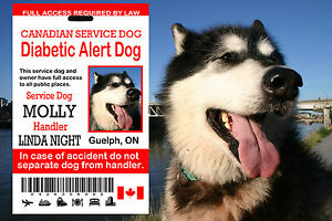 Canadian Service Dog Id Card, Diabetic Alert, Service Dog ID Tag , SD ID Card