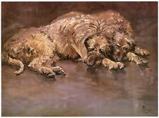 IRISH WOLFHOUND DOG FINE ART LIMITED EDITION PRINT  IWH - by Malcolm Coward