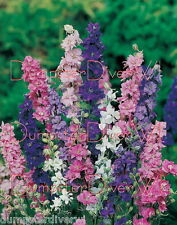 Imperial Giant LARKSPUR 155+ Seeds Mix colors Bouquet  cut flowers butterflies