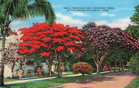 Postcard Royal Poinciana And Jacaranda Trees In Full Bloom Florida Posted 1940