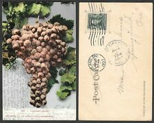 1907 California Postcard - Grapes - Charlton Company #108