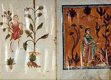 FAKS. St. 4-Medicina Antiqua = CODEX VINDOBONENSIS 93 scolapius Herba uettonic