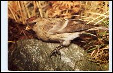 Tierfoto-AK VOGEL Vögel Bird Birds BIRKENZEISIG AK vom Planet Verlag ungelaufen