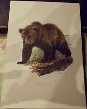 N°90 Mammal Poster Brown Bear Grizzly Alaska