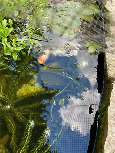 Pond Plant. 5 x Hornwort oxygenating plant.