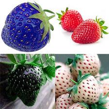 100 Erdbeersamen der Blau Rot Erdbeere Früchte Obst Saatgut Strawberry Seed Neu
