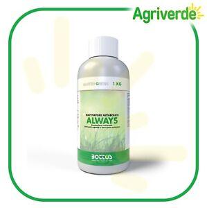 Concime Azotato Riattivatore Metabolico Master Green Always 1 Kg BIO - Bottos
