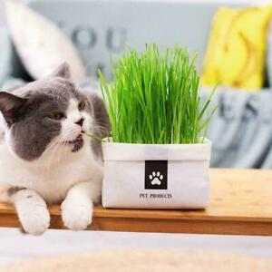 Cat Grass Planting Bag Cat Grass DIY Soilless Culture Lemongrass G3H3 Ed G9X7