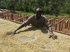 5 lbs Ethiopian Natural Sidamo Grade 4 Guji Fresh Unroasted, Green Coffee Beans
