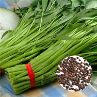 400Pcs/Bag Vegetable Garden Seeds Water KANG Plant Leaf Green SPINACH Seeds Q3Y3
