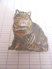 broche chat exotic classique divers couleurs collection Atlas( no pins)