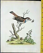 Edwards,Natural History,Blue-throat Redstart,handc.Engraving,ca. 1741#28