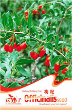 1 Pack 50 Barbary Wolfberry Seeds Medlar Goji Berry Lycii Organic E006