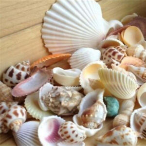 100g Beach Mixed SeaShells Mix Sea Shells Shell Craft SeaShells Aquarium EA4