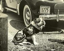 MARINE CORPS BULLDOG MASCOT JIGGS IV VINTAGE PHOTO HQMC USMC 1942 #20875