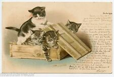 Héléna Maguire. Chats. Cats. Katze . gato