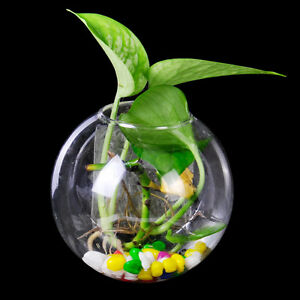 Hanging Glass Flower Plant Vase Terrarium Container Home Garden Ball Decor