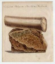 Archéologie-mammutzahn-éléphant-stoßzahn - Bertuch-cuivre pli 1800