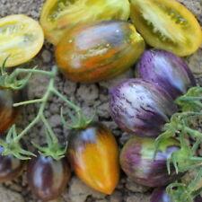 Brad's Atomic Grape Tomato - 10+ seeds - ATOMIC GREEN DELICACY!