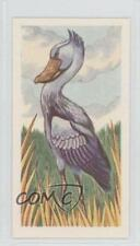 1961 Miranda Confectioners Strange Creatures #14 Shoebill or Whale-Head Card a8x