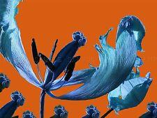 PHOTO COMPOSITION NATURE FLOWER PLANT COLOUR TINT TULIP BLUE POSTER BMP10310