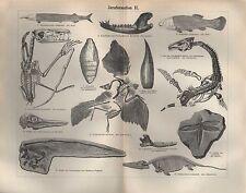 Lithografie 1896: Juraformation I-III. Ichthyosaurus communis. Koprolith.