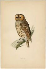 """poster owl barn old drawing  art print vintage for glass frame 36"""" x 24"""""""