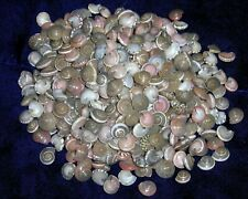 1/2 Pound Of Pink Umbonium Sea Shells Beach Decor Nautical Craft Tropical