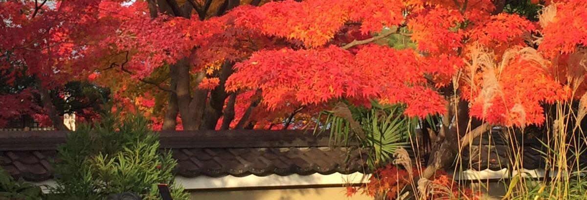 Love_kyoto1