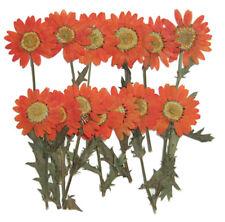Pressed flowers, card making, art craft materials, 20pcs orange marguerite
