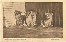 Leipzig, Zoologischer Garten, Junge Löwen, Tierpark, Zoo, alte Ak um 1920