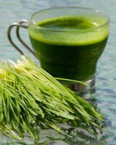 1kg Organic Barley grass powder (EU)