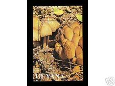 0231++GUYANA  BLOC  N°1  CHAMPIGNONS  1996